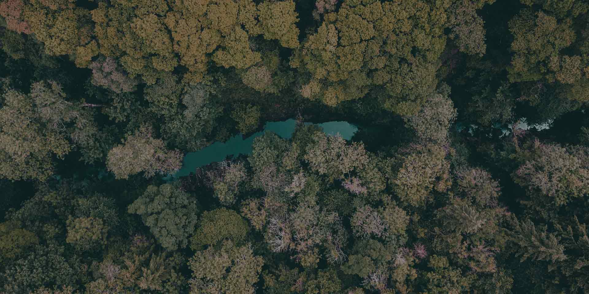 homepage-thefutureforestcompany-trees
